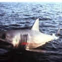jaws2promophoto2