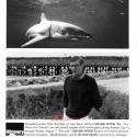 SharkWeekBenchley